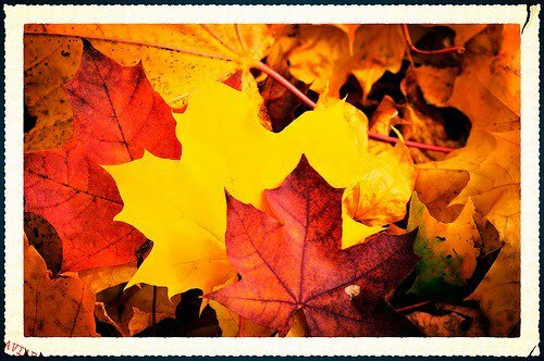 IF THIS WEEK IS YOUR BIRTHDAY: Sure you're annoyed by falling leaves that mark the end of summer, but did you know they symbolize your year? This year your heart will flutter! But don't leaf it to cupid! Fall-ow your heart and make it happen. Photo courtesy of Stock Xchng
