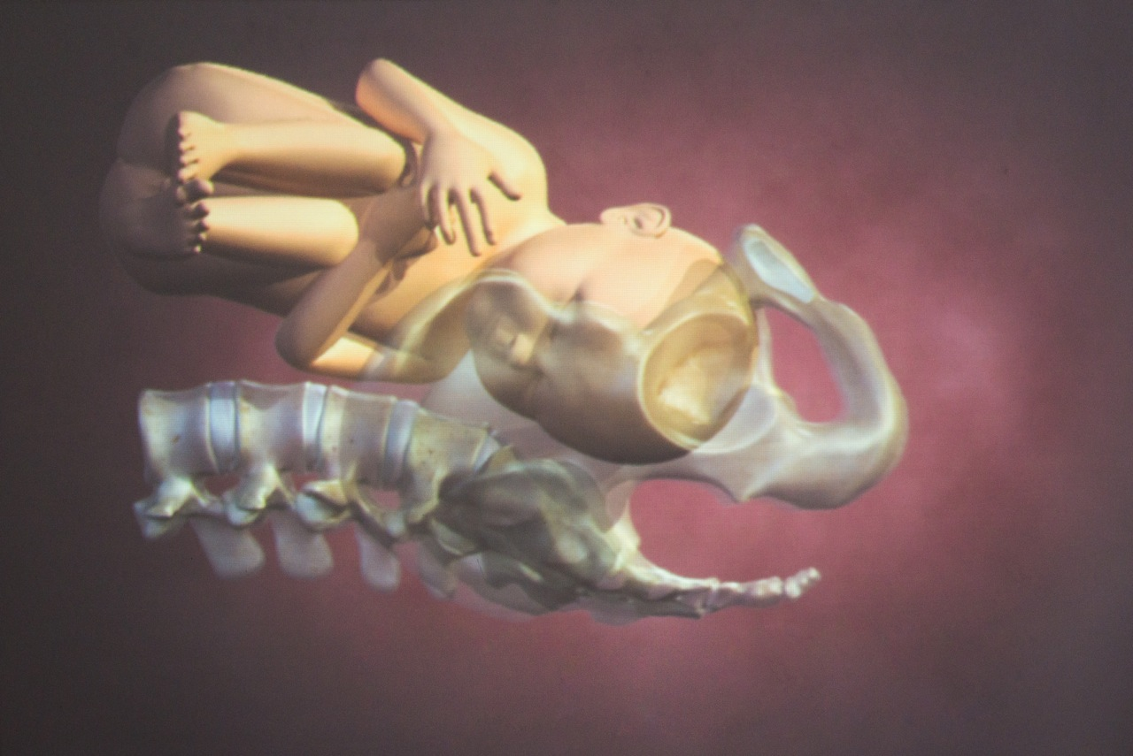 A fetus modelled in 3D. Photo by Scott McAlpine, June 2013.